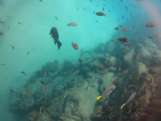 Aqua Activities Los Cabos: Cabo Lots of Fish 2