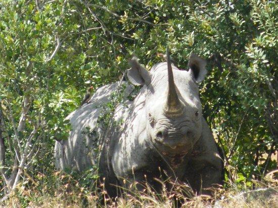 Porini Rhino Camp : Rhino - Black