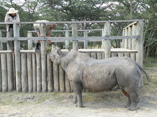 Porini Rhino Camp : Baraka - blind Black Rhino