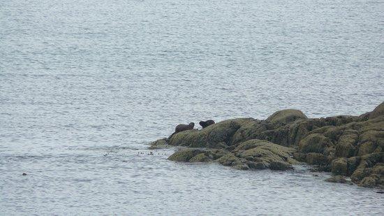 Sea Kayak Scotland: Otters