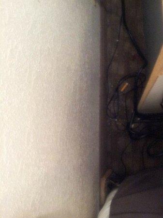 Red Roof Inn Tampa Busch: puchos detras de la mesa de noche