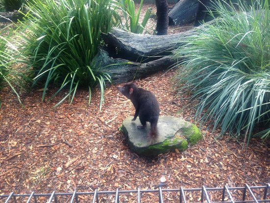 Australian Eco Adventures - Day Tours