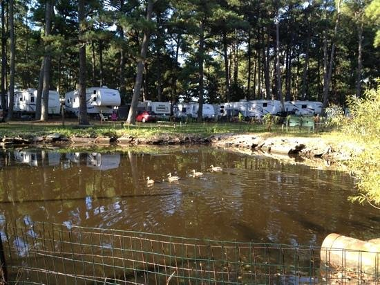 Pine Grove Campground and Waterfowl Park: Duck pond was not too impressive