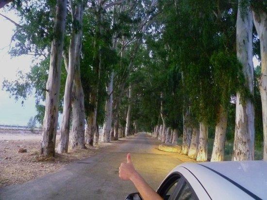 Hotel Jade: Ausflug, Eukalyptus-Allee bei Akyaka