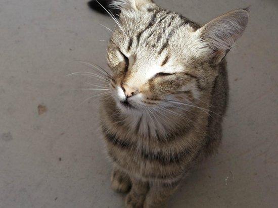 Vineyard Cave Hotel: 朝食中に猫が遊びにきました