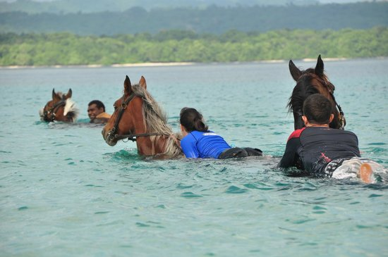 Ratua Private Island: Swimming the horses across the bay