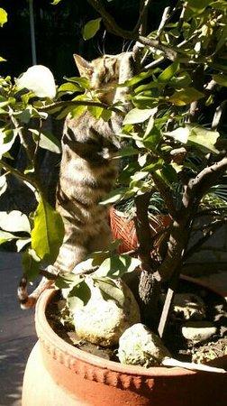 Hotel Ganesh Himal: we fond a cute kitty in the courtyard....