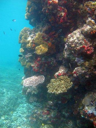 Ratua Private Island: Reef at Ratua Island
