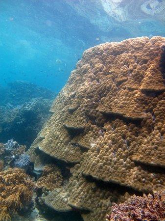 Ratua Island Resort & Spa : Reef at Ratua Island