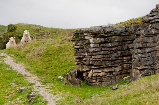 Spellbound Glowworm & Cave Tours: Inquisitive sheep on the track to the first cave.