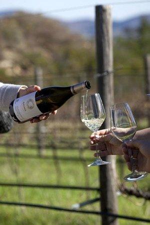 Avondale Wine: Eco Tour