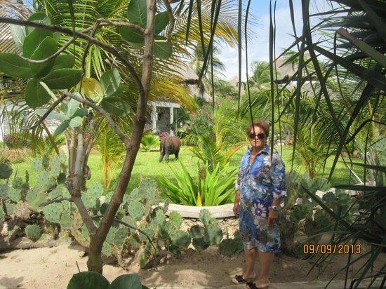 Kola Beach Resort: sculture nel parco
