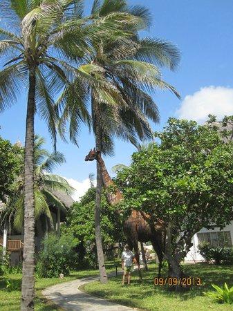 Kola Beach Resort: parco del resort