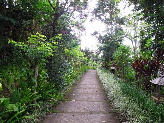 Munduk Moding Plantation: Walkway