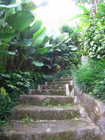 Munduk Moding Plantation: Steps to Villa