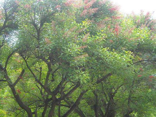 Orto botanico pianta con fiori rossi 1 foto di orto for Pianta con fiori rossi
