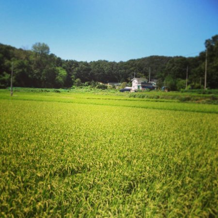 Ogamul Guesthouse: on the way to Ogamul-rice field