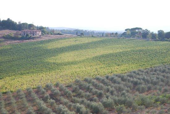 La Loggia - Villa Gloria: View from the room
