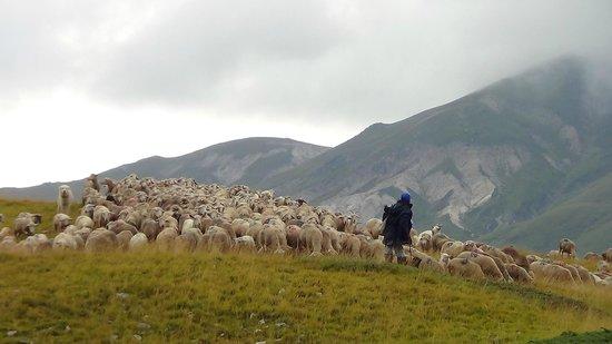 campo imperatore, un pastore e il suo gregge