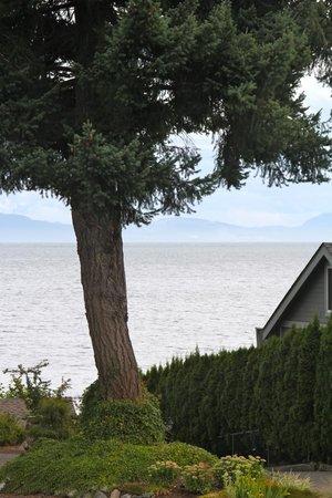 Willow Guest House: Blick aus dem Fenster