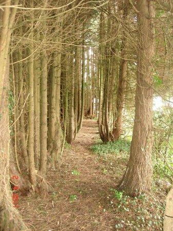 Creacon Wellness Retreat: Creacon Lodge Woodland Walk