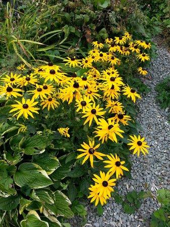 Creacon Wellness Retreat: Creacon Lodge Garden