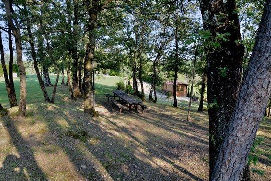 Agriturismo Il Colle: Area realx