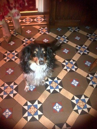 Strathmore Guest House: Poppy The Dog