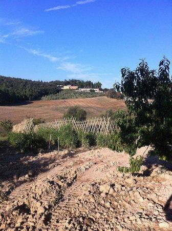 Agriturismo La Bruciata: View from pool area