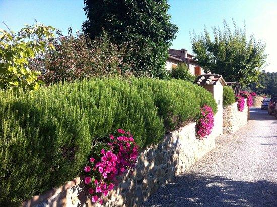 Agriturismo La Bruciata: Beautiful flowers and landscaping everywhere
