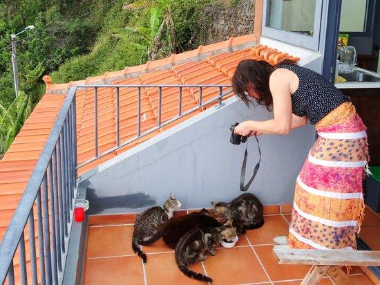 Calhau Grande: nos amis les chats