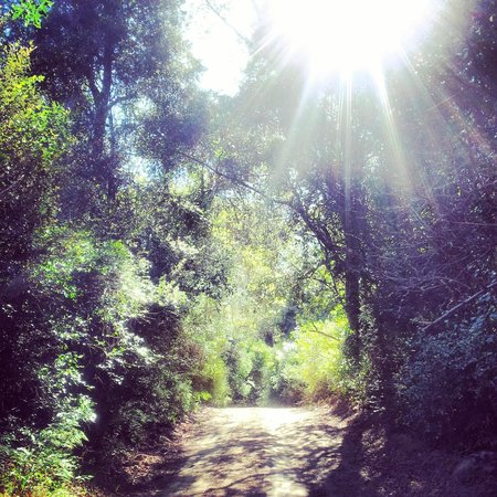 The Shire Eco Lodge: In the forest