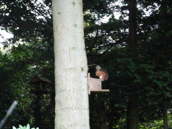 Claremont House: Red squirrel in garden