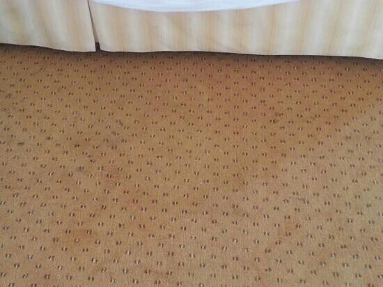 Hotel Regina : moquette tachée