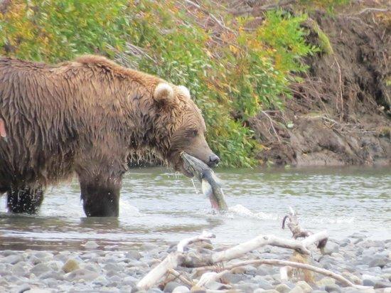 Alaska Bear Adventures: Here's how you fish.