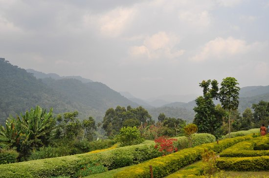 Silverback Lodge: You can see all the way to Rwanda and the DR Congo