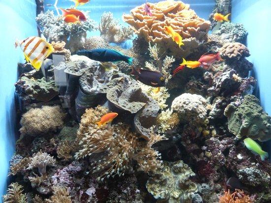 Sensacional Fotograf A De Monterey Bay Aquarium