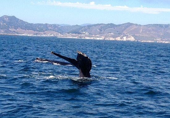 Central Coast Sailing Charters: Incredible whale watching that day!