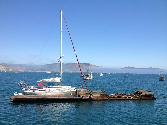 Central Coast Sailing Charters: The beautiful sailboat docked with sea lions around it.
