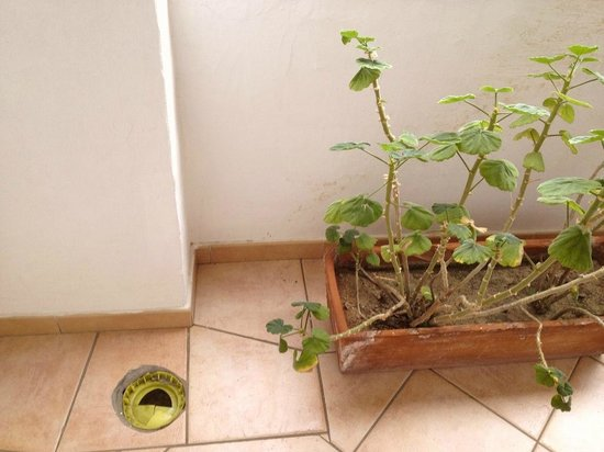 Hotel Pulicinu: Loch auf dem Balkon der Suite, jämmerliche Geranien