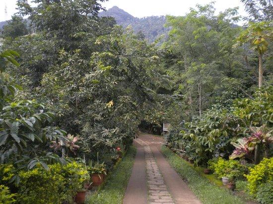 Crescent Residency : Garden area