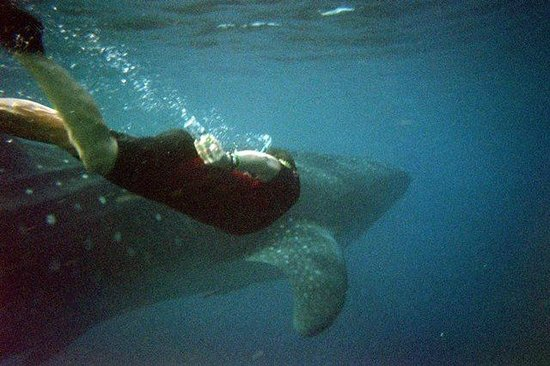 Cancun Whale Shark Tours: Me with whale shark