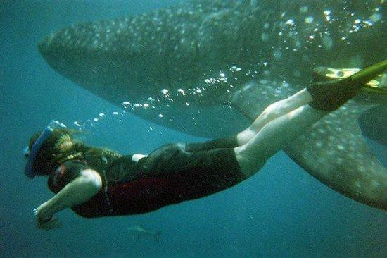 Cancun Whale Shark Tours: me and whale shark