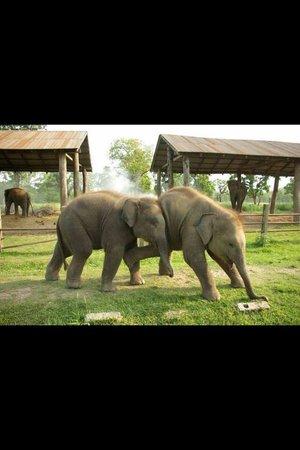 Hotel Rhino Land: Babies are playing