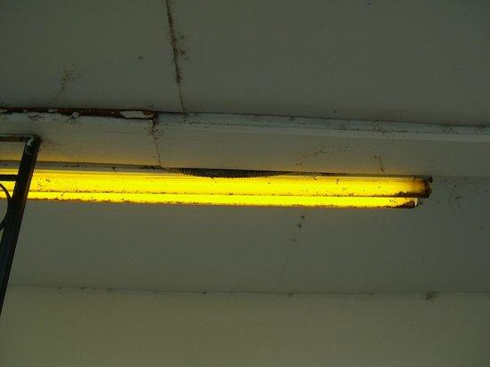 Hawthorne Motel: bug filled lights