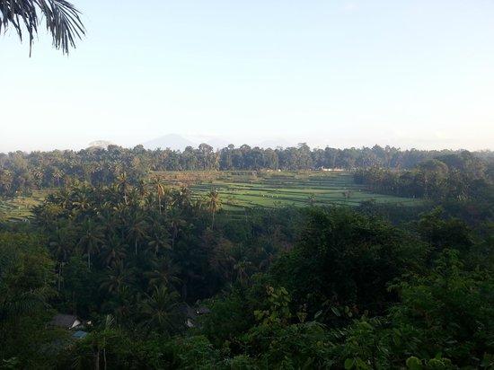 view from Scene restaurant while having breakfast