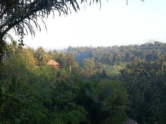 Landscape - The Samaya Bali Ubud: view from Scene restaurant while having breakfast