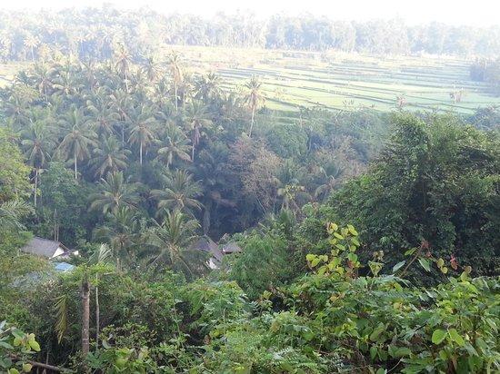 The Samaya Bali Ubud: view from Scene restaurant while having breakfast