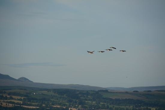 The Braes B&B: Canada Geese among the vaste array of wildlife