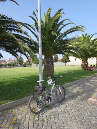 Rent a Fun - Electric Bike tours & Rentals: Sous l'ombre des Palmiers...